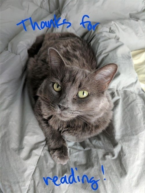 An annotated photograph of a grey cat lying on a lighter grey blanket that says thanks for reading.
